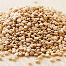 La quinoa, para fortalecer los pajaros, aves y canarios