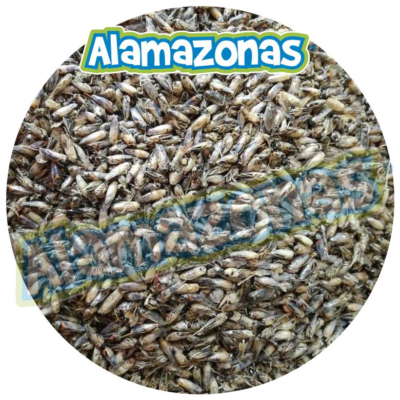 Mosco Seco Deshidratado (alimento Mascotas) 250 g Alamazonas El mosco seco es un alimento deshidratado entero natural que se ofrece como complemento adicional proteico para toda clase de aves silvestres, exóticas y mascotas con dietas insectívoras, pájaros como cenzontles, clarines jilgueros, huitlacoches, calandrias, ruiseñor, gorriones, cardenales, cenzontles, jilgueros, huitlacoches, mascotas como erizos y toda clase de reptiles camaleones, ranas, iguanas, tortugas de tierra, camaleón, lagartija colilarga, lagartija roquera ,lagarto de cristal, lagartos salamanquesas entre otros.